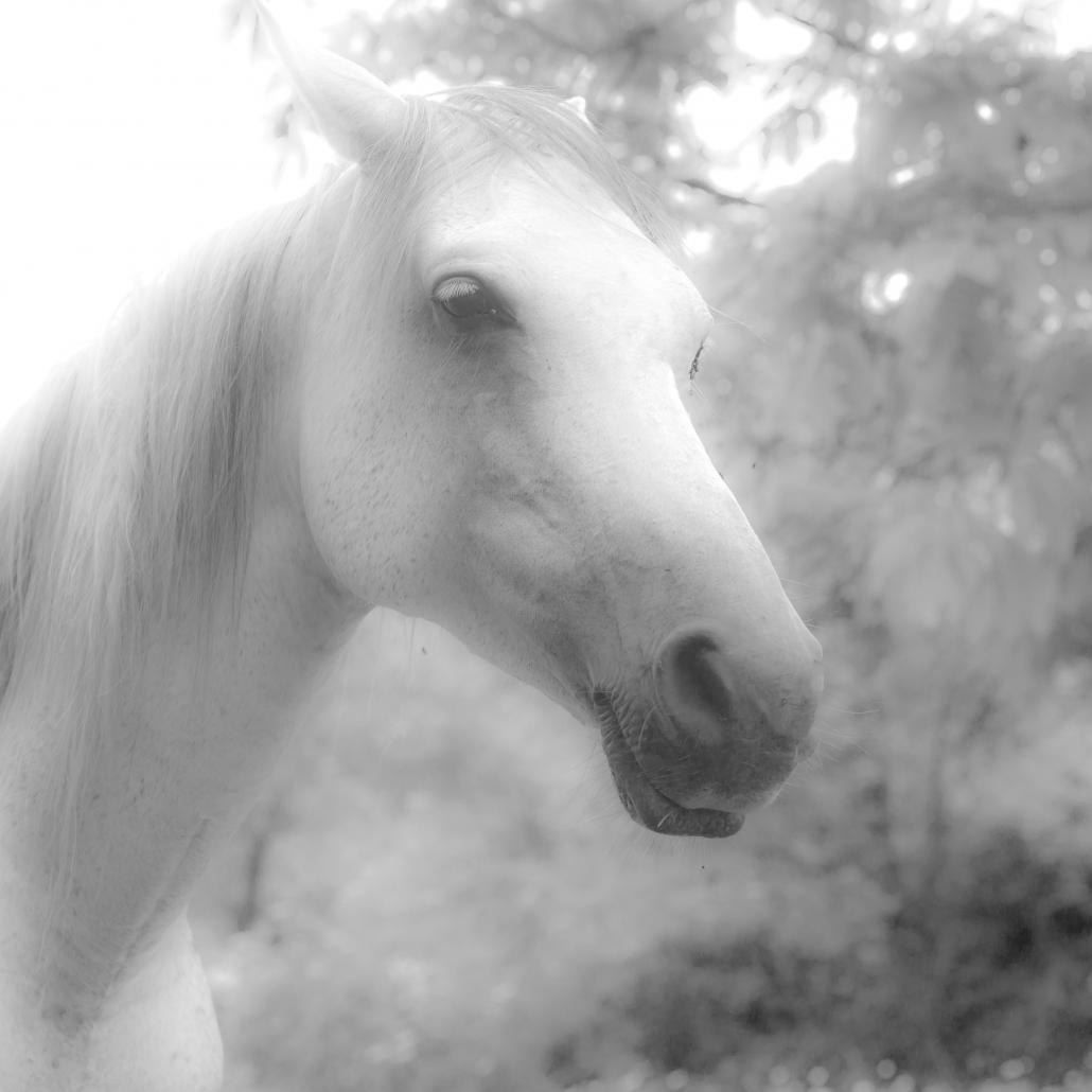 """""""Retrato de un caballo"""", Foto de la semana 10/2018 en la Asociación Fotográfica de Toledo"""